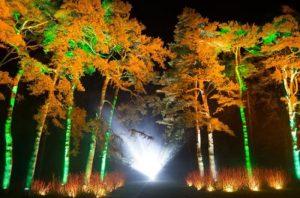 Enchanted Christmas woodland gloucester